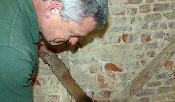 Woodworm and Rot Inspection