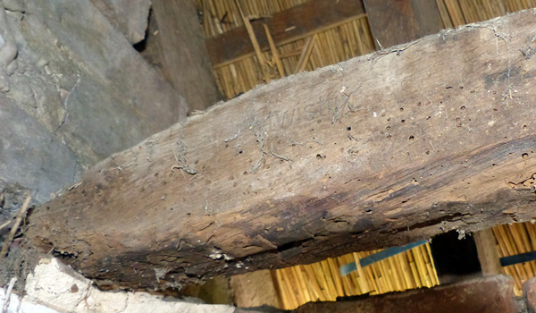 Woodworm in Chichester Cottage